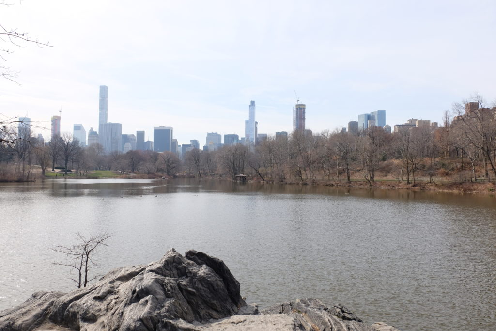 First pic in NYC: Central Park view.