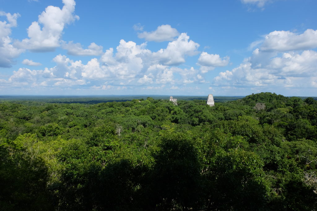 Temples peeking over the treetops